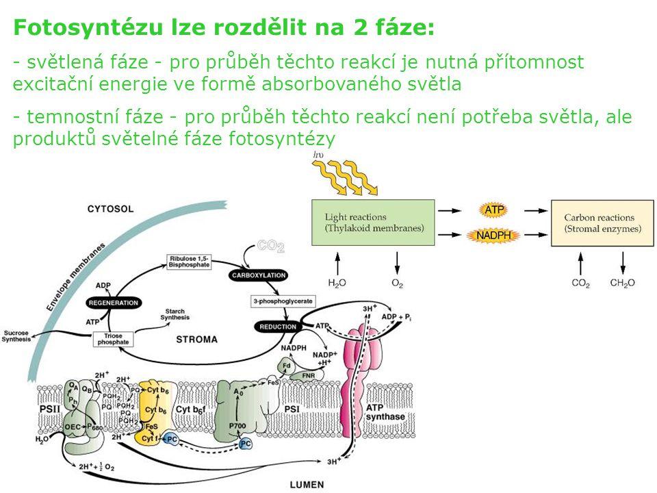Fotosyntézu lze rozdělit na 2 fáze: