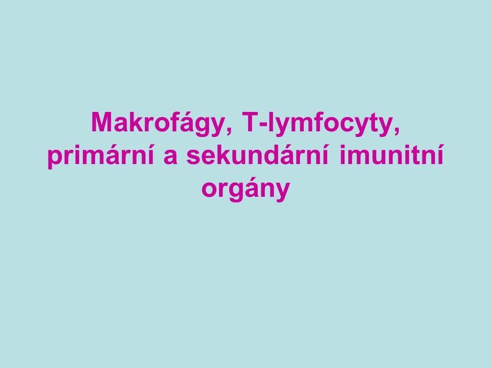 Makrofágy, T-lymfocyty, primární a sekundární imunitní orgány