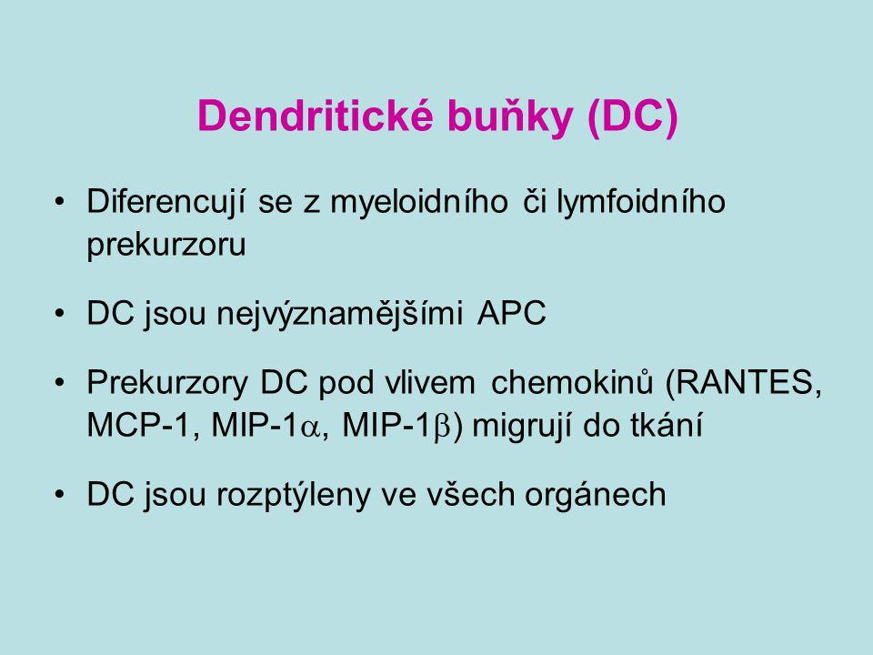 Dendritické buňky (DC)