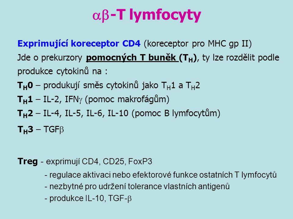 ab-T lymfocyty TH3 – TGFb Treg - exprimují CD4, CD25, FoxP3