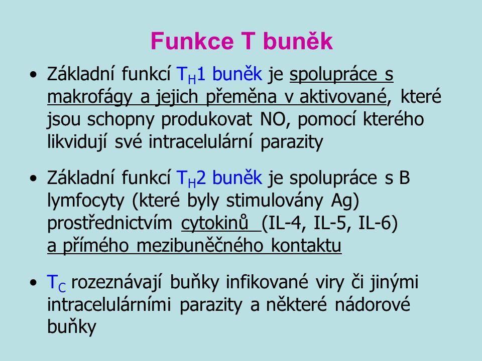 Funkce T buněk