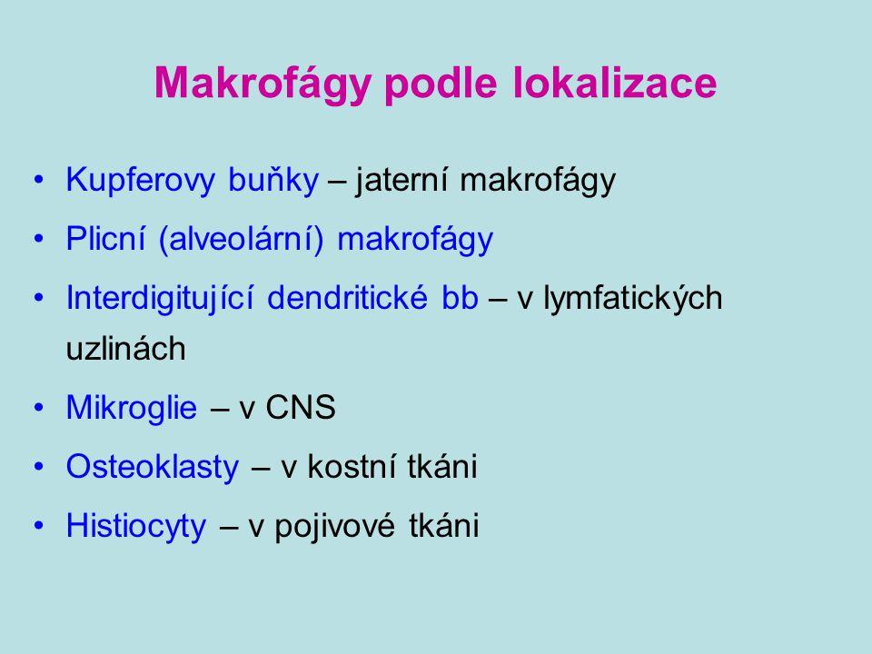 Makrofágy podle lokalizace