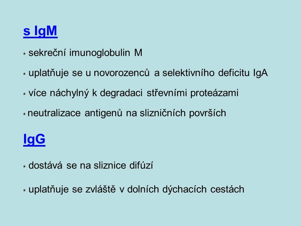 s IgM. sekreční imunoglobulin M