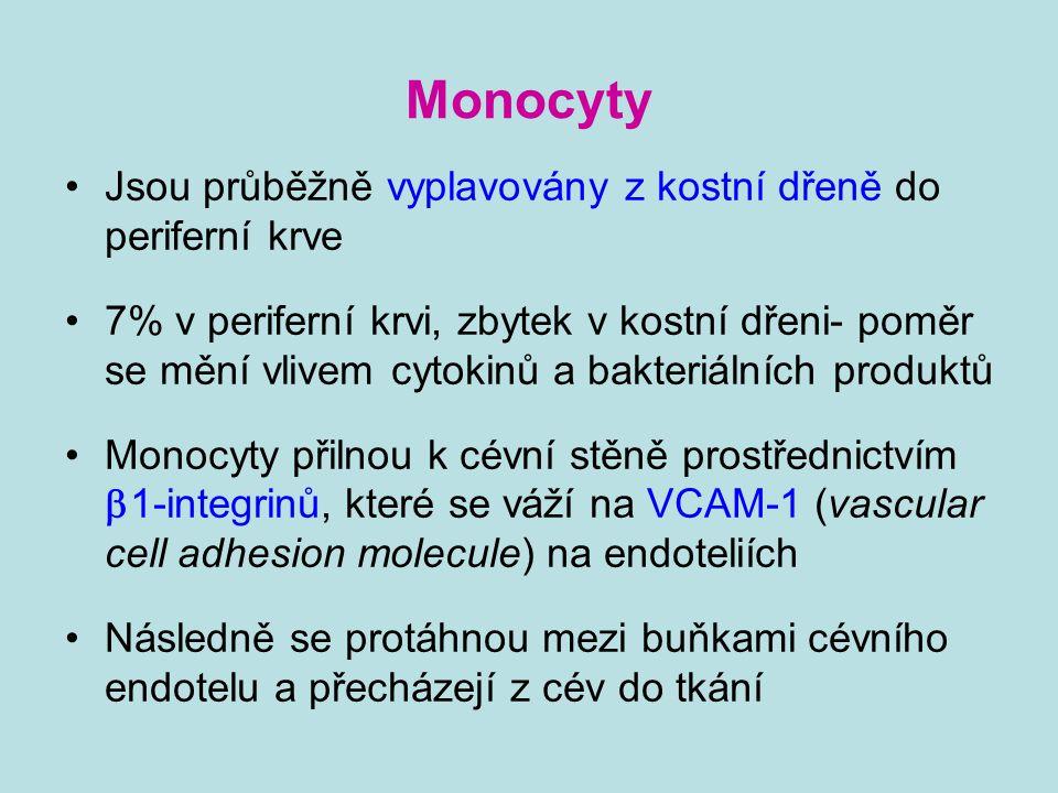 Monocyty Jsou průběžně vyplavovány z kostní dřeně do periferní krve