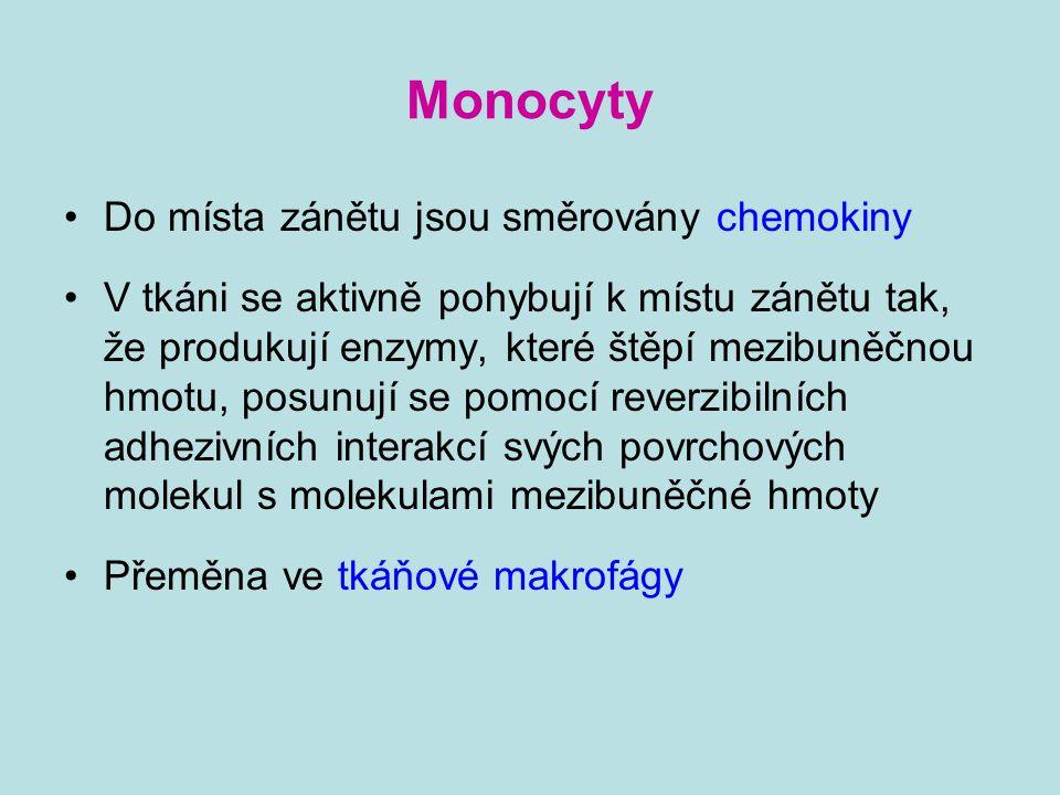 Monocyty Do místa zánětu jsou směrovány chemokiny