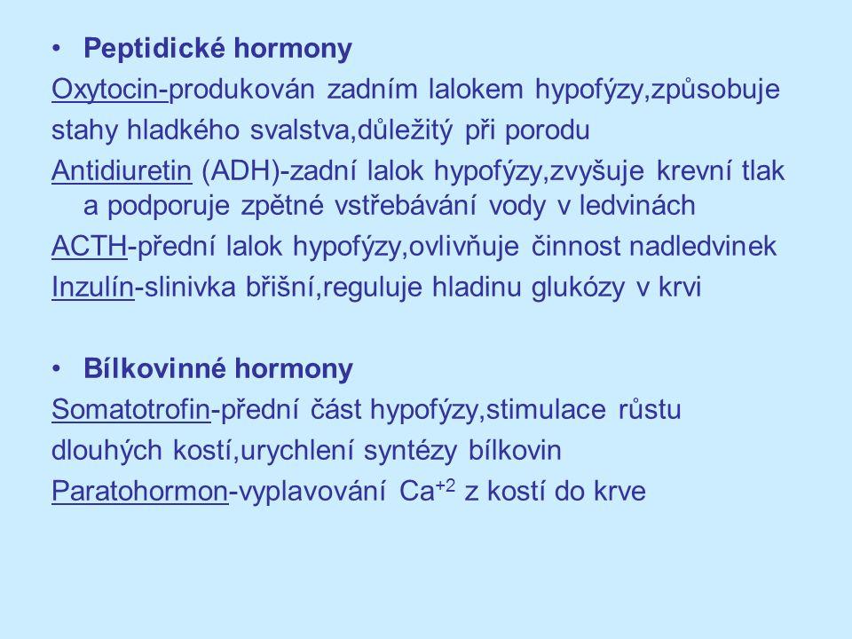 Peptidické hormony Oxytocin-produkován zadním lalokem hypofýzy,způsobuje. stahy hladkého svalstva,důležitý při porodu.