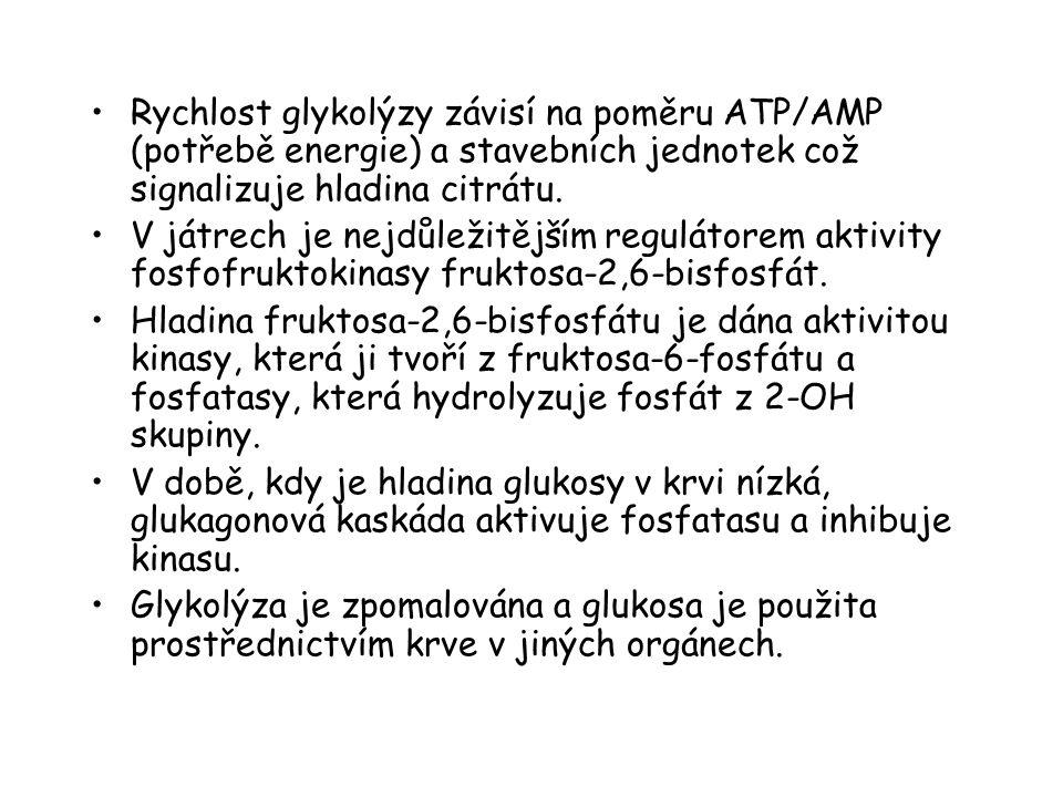 Rychlost glykolýzy závisí na poměru ATP/AMP (potřebě energie) a stavebních jednotek což signalizuje hladina citrátu.