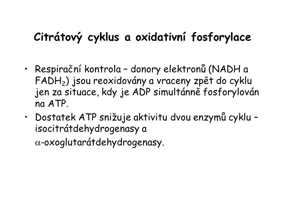 Citrátový cyklus a oxidativní fosforylace