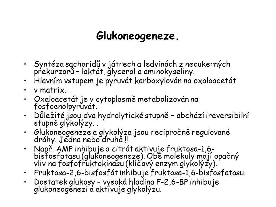 Glukoneogeneze. Syntéza sacharidů v játrech a ledvinách z necukerných prekurzorů – laktát, glycerol a aminokyseliny.