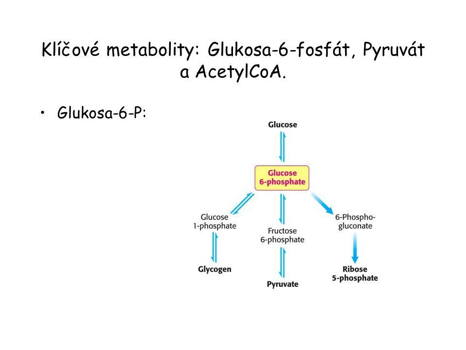 Klíčové metabolity: Glukosa-6-fosfát, Pyruvát a AcetylCoA.