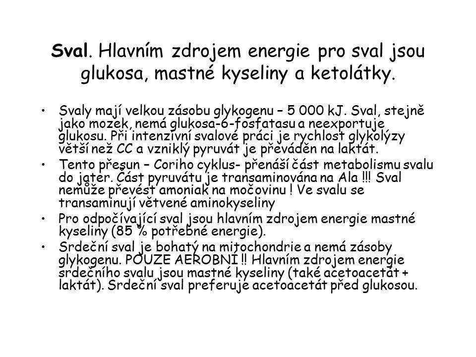 Sval. Hlavním zdrojem energie pro sval jsou glukosa, mastné kyseliny a ketolátky.