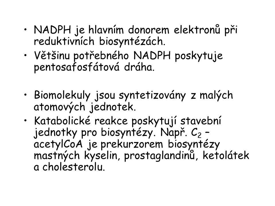 NADPH je hlavním donorem elektronů při reduktivních biosyntézách.