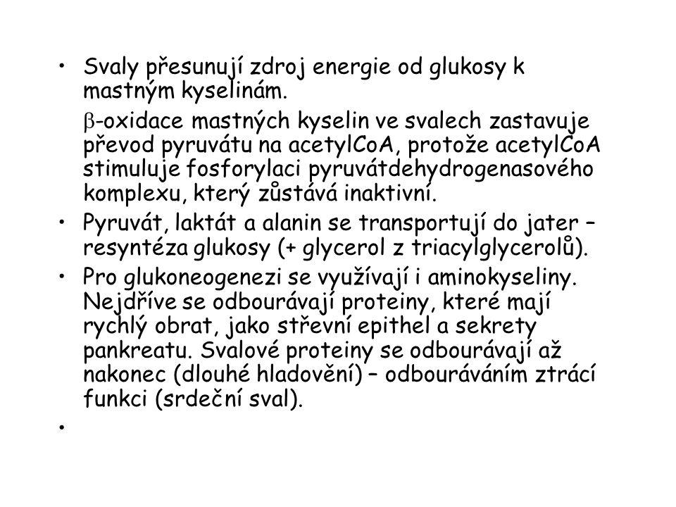 Svaly přesunují zdroj energie od glukosy k mastným kyselinám.