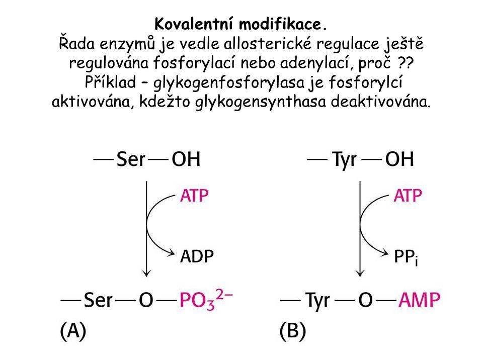 Kovalentní modifikace