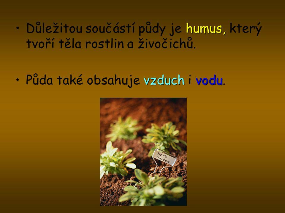 Důležitou součástí půdy je humus, který tvoří těla rostlin a živočichů.