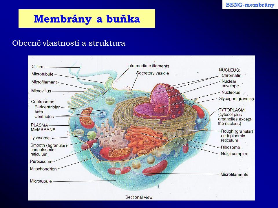 BENG-membrány Membrány a buňka Obecné vlastnosti a struktura