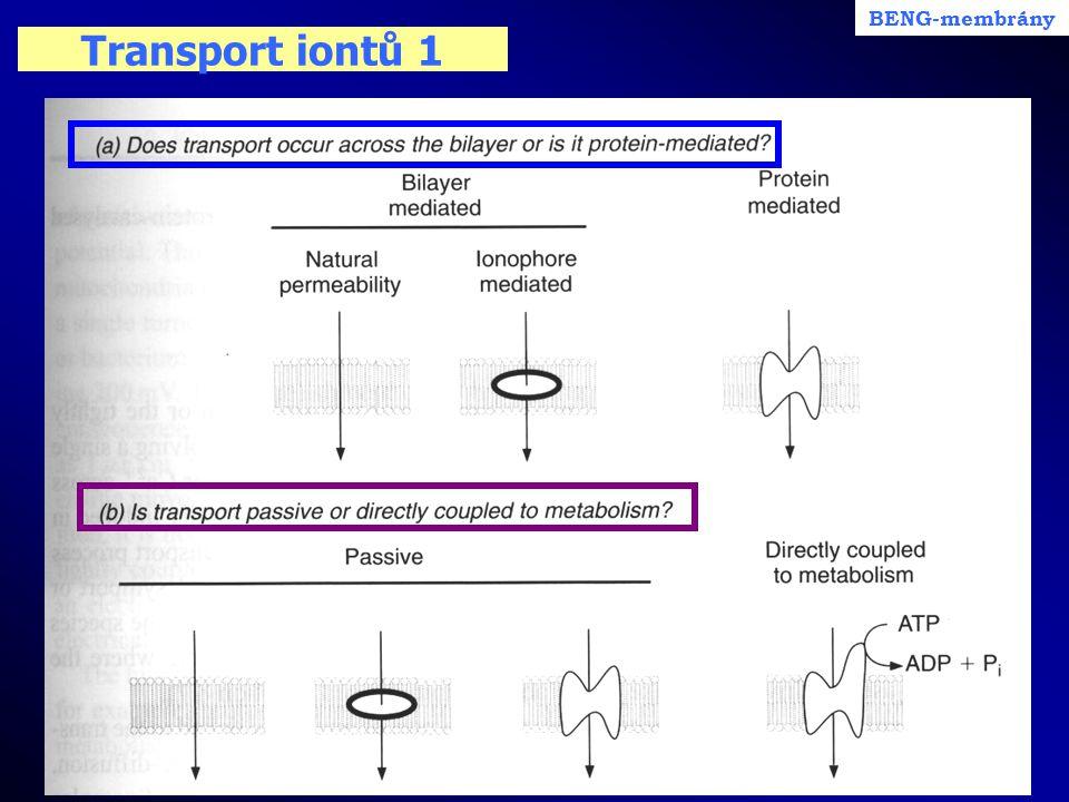 BENG-membrány Transport iontů 1