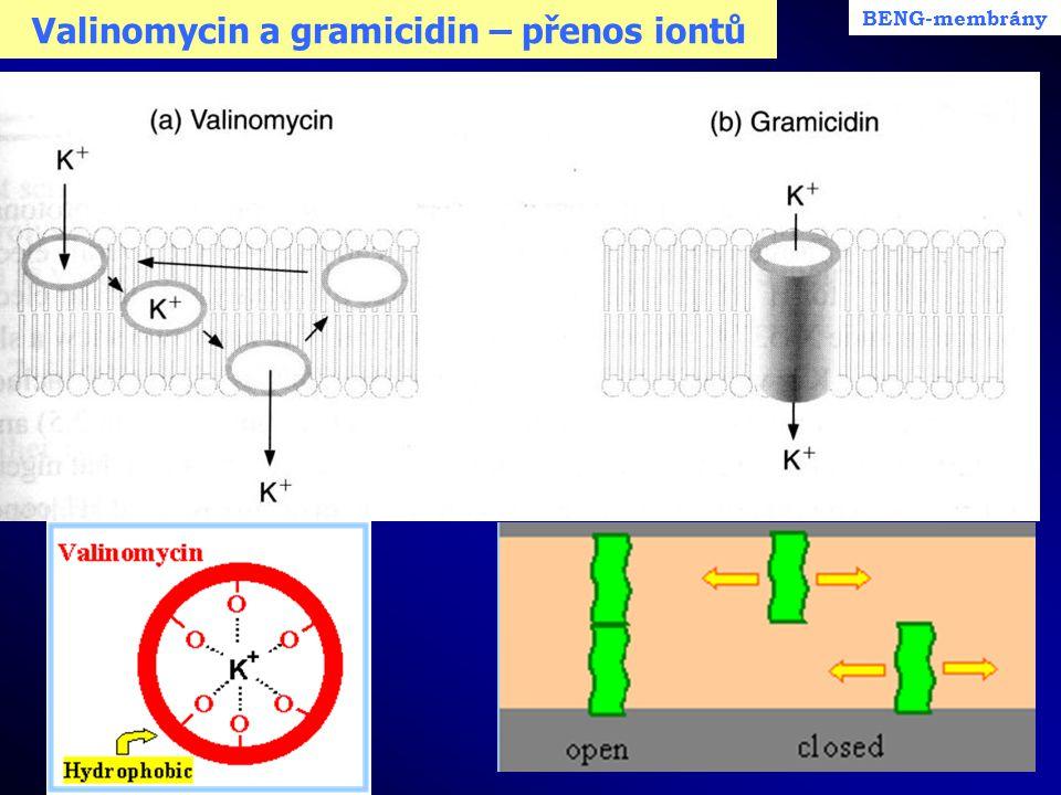 Valinomycin a gramicidin – přenos iontů