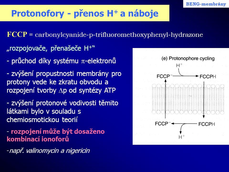 Protonofory - přenos H+ a náboje