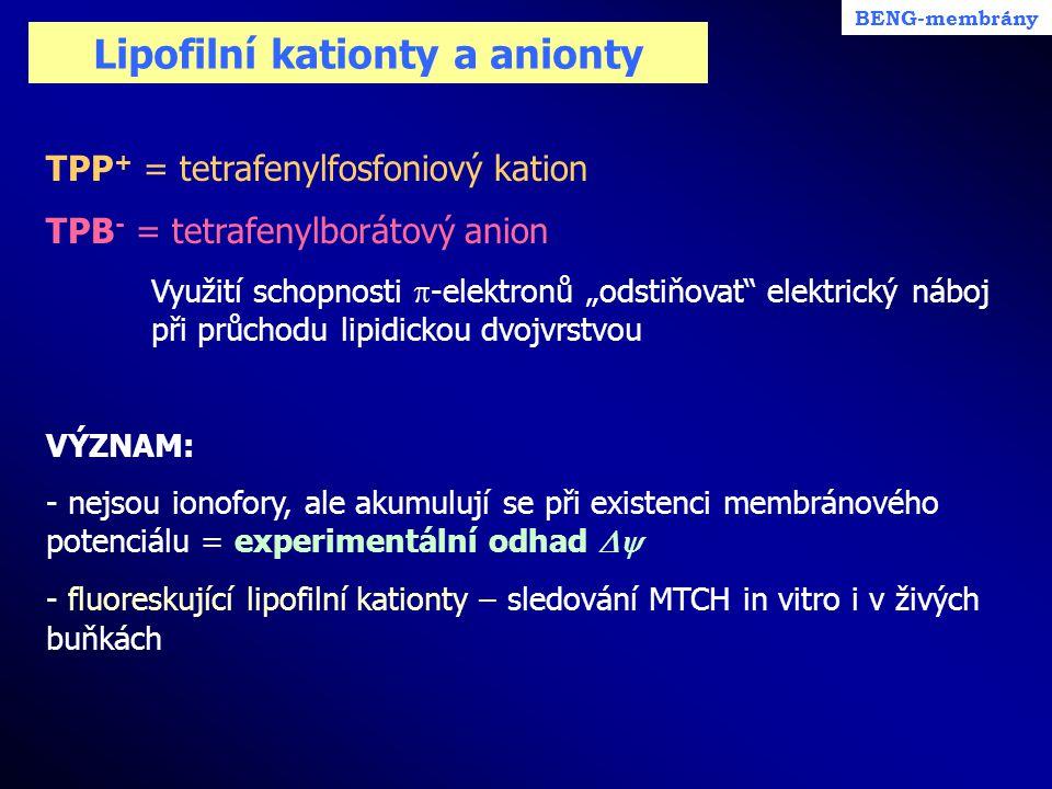 Lipofilní kationty a anionty