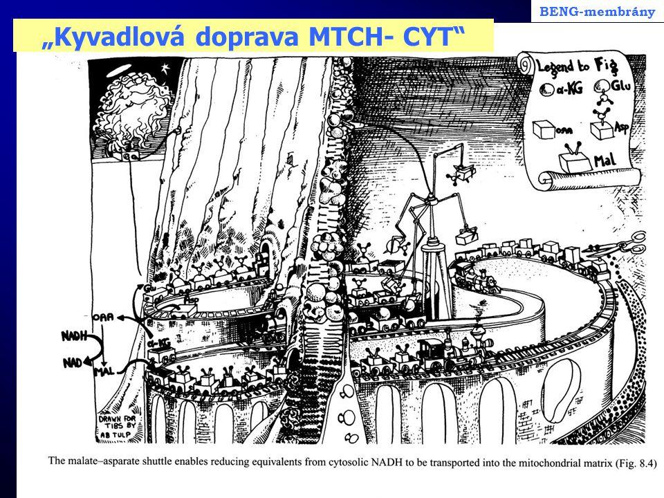 """""""Kyvadlová doprava MTCH- CYT"""
