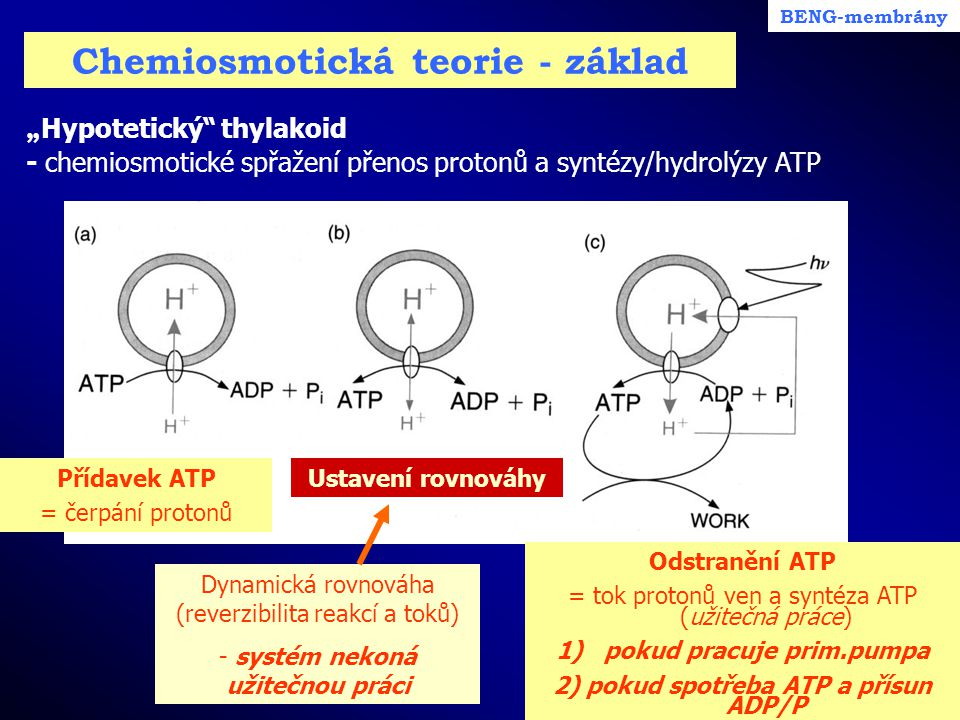 Chemiosmotická teorie - základ