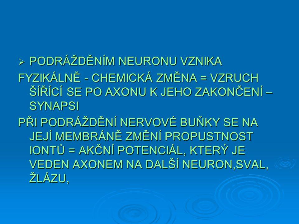 PODRÁŽDĚNÍM NEURONU VZNIKA