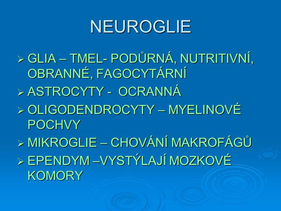 NEUROGLIE GLIA – TMEL- PODŮRNÁ, NUTRITIVNÍ, OBRANNÉ, FAGOCYTÁRNÍ