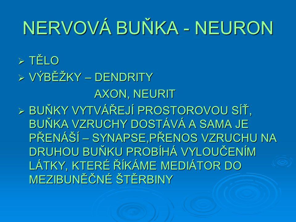 NERVOVÁ BUŇKA - NEURON TĚLO VÝBĚŽKY – DENDRITY AXON, NEURIT