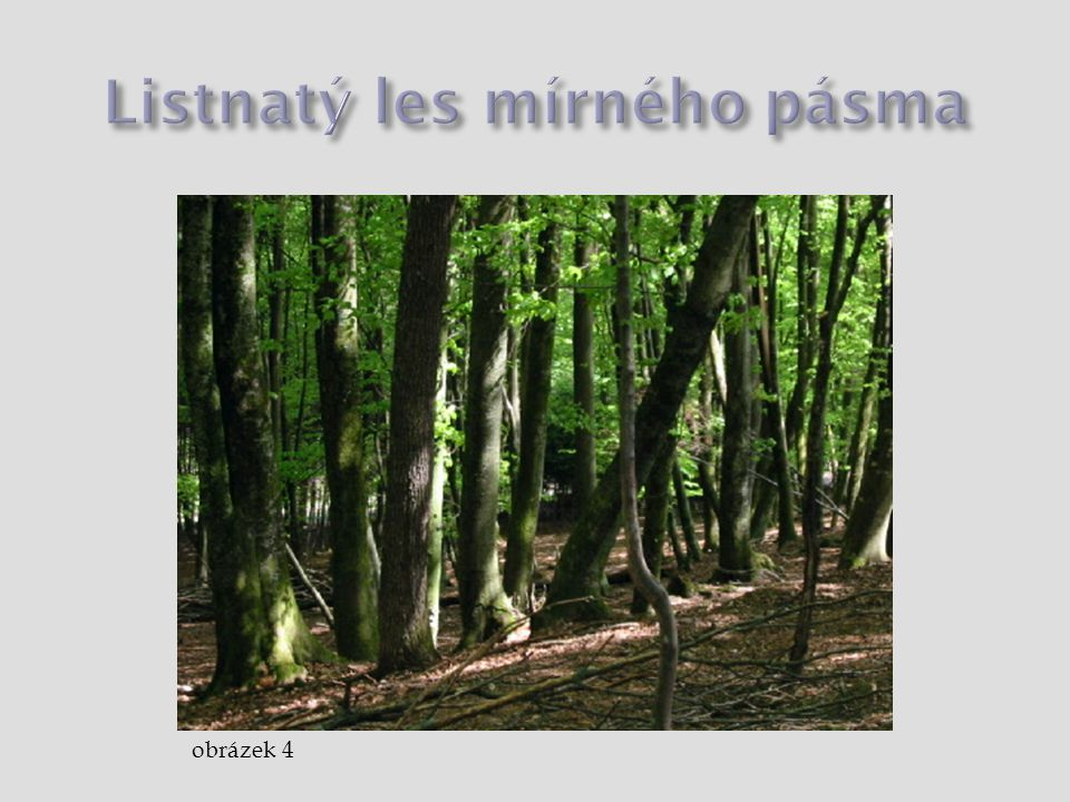 Listnatý les mírného pásma