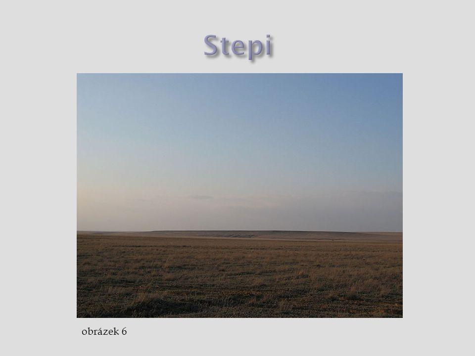 Stepi obrázek 6