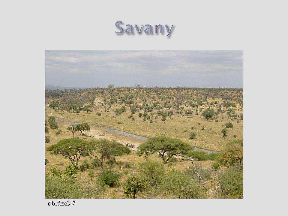 Savany obrázek 7