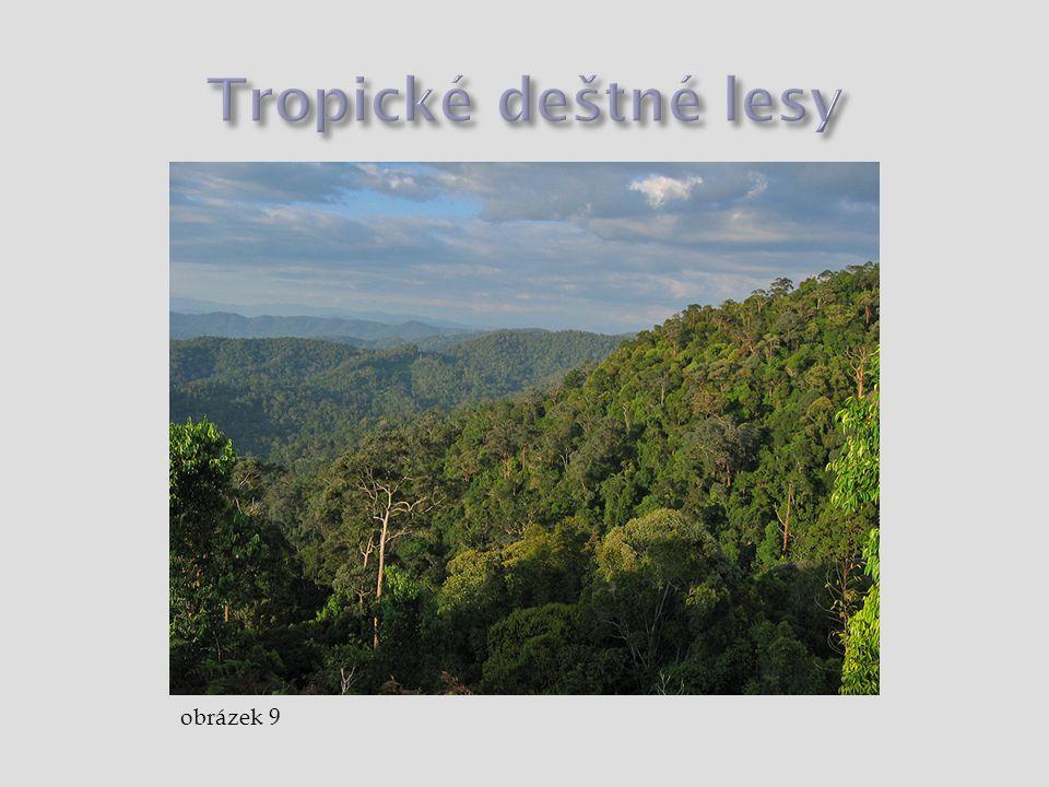 Tropické deštné lesy obrázek 9