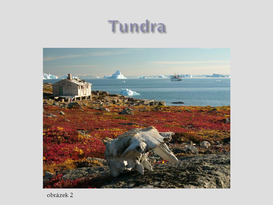 Tundra obrázek 2