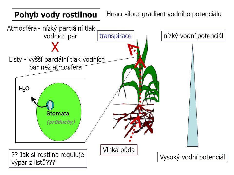 X Pohyb vody rostlinou Hnací silou: gradient vodního potenciálu