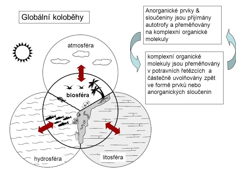 Anorganické prvky & sloučeniny jsou přijímány autotrofy a přeměňovány na komplexní organické molekuly