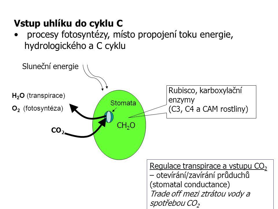 Vstup uhlíku do cyklu C procesy fotosyntézy, místo propojení toku energie, hydrologického a C cyklu.