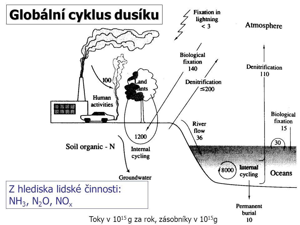 Globální cyklus dusíku