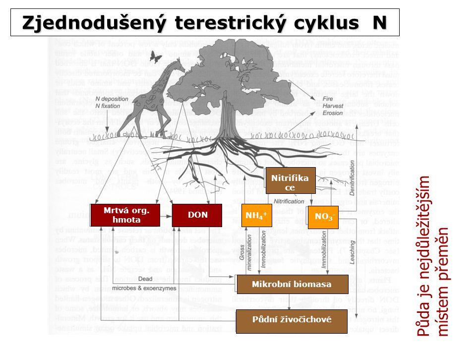 Zjednodušený terestrický cyklus N