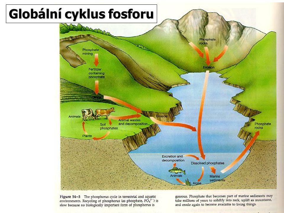 Globální cyklus fosforu