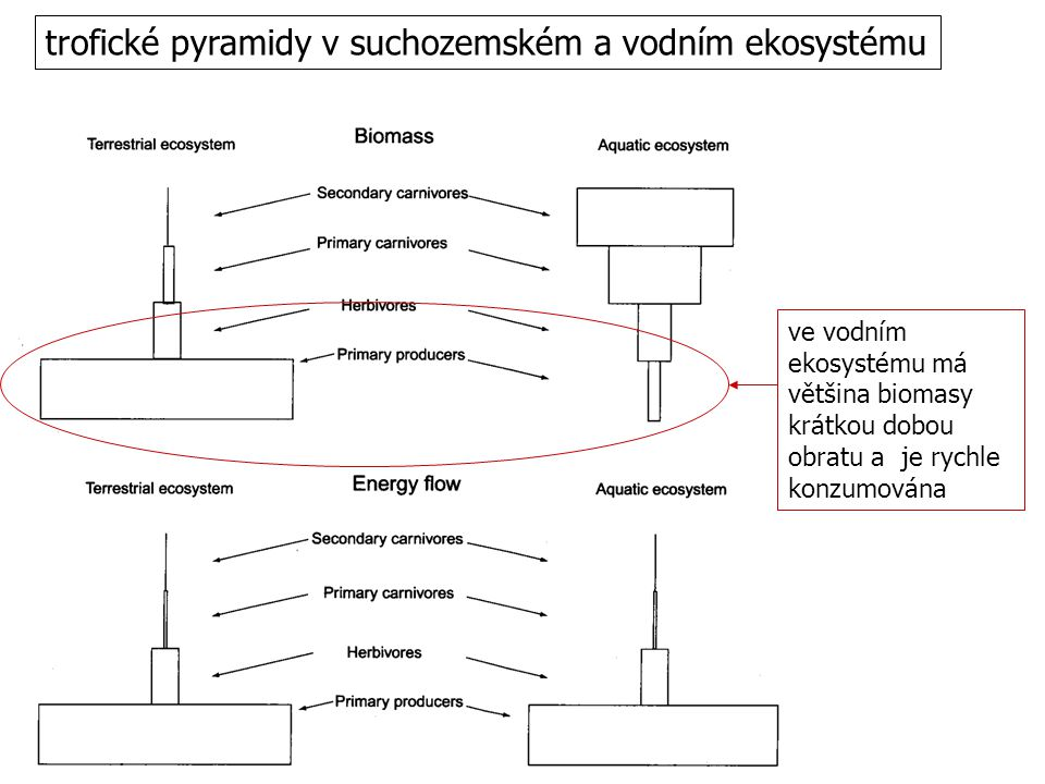 trofické pyramidy v suchozemském a vodním ekosystému