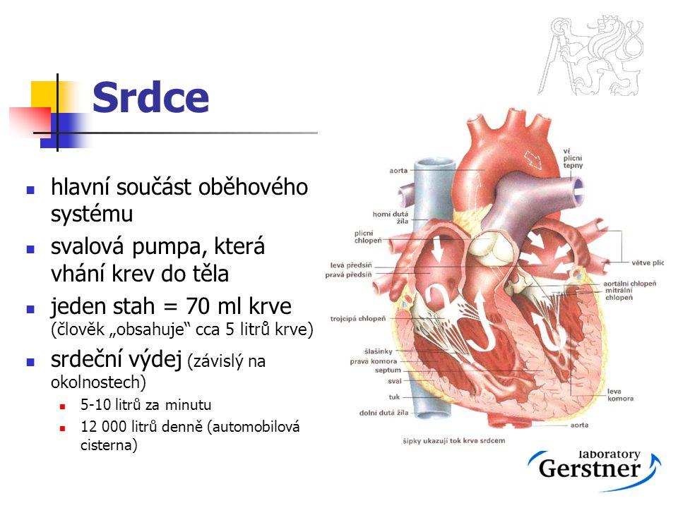 Srdce hlavní součást oběhového systému