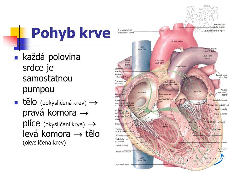 Pohyb krve každá polovina srdce je samostatnou pumpou