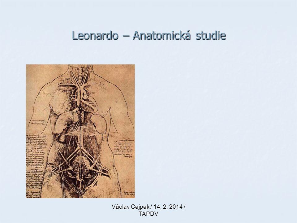 Leonardo – Anatomická studie
