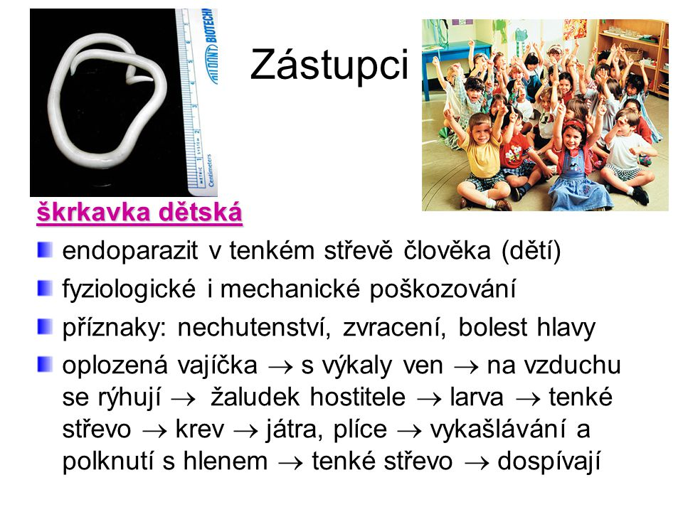 Zástupci škrkavka dětská endoparazit v tenkém střevě člověka (dětí)