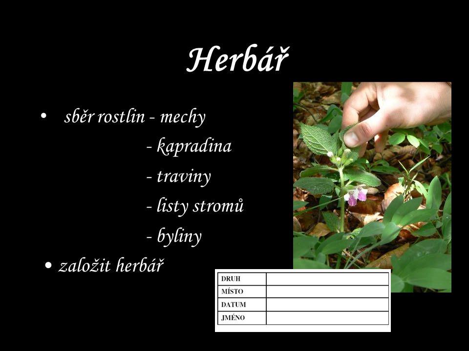 Herbář sběr rostlin - mechy - kapradina - traviny - listy stromů