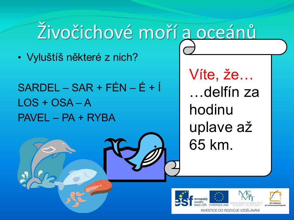 Živočichové moří a oceánů