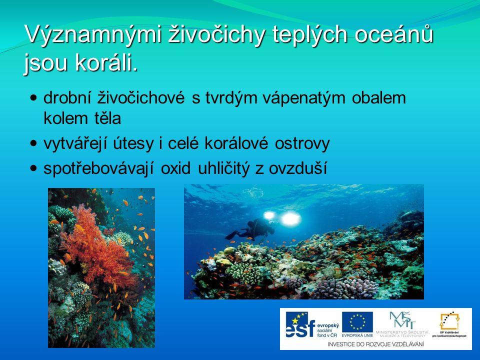 Významnými živočichy teplých oceánů jsou koráli.