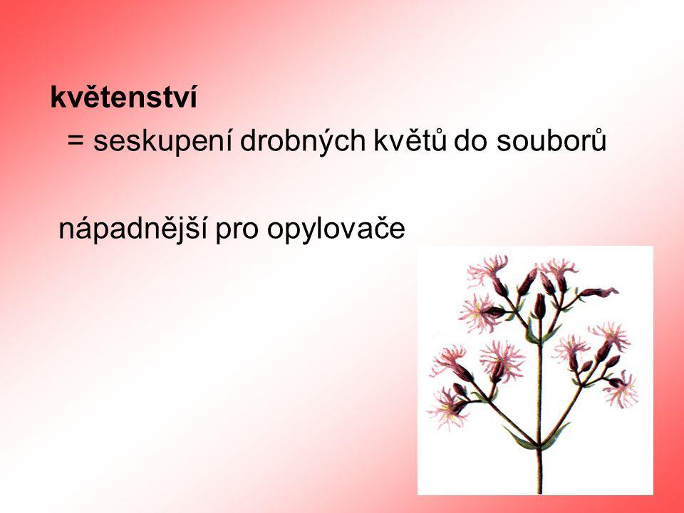 květenství = seskupení drobných květů do souborů nápadnější pro opylovače