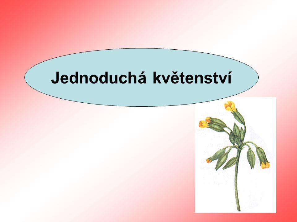 Jednoduchá květenství